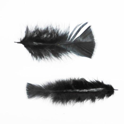 oiseau plume oeuf et cie plume color e noire mat riel d 39 art floral et conseils pour la. Black Bedroom Furniture Sets. Home Design Ideas