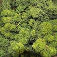 Mousse lichen d'islande Vert Forêt