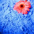 Flocon de poudre OASIS coloris Bleu- roi