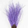 Botte de 50 branches de bouleau colorées Violet