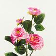 Rose branchue 4 fleurs Rose vif