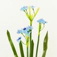 Branche mini-orchidée en piquet couleur Bleu