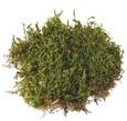 Plaque de mousse verte séchée