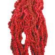 Amaranthe Caudatus Rouge stabilisée