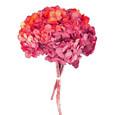 Hortensia stabilisé coloris Rouge