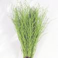 Botte de 50 branches de bouleau colorées Vert tendre
