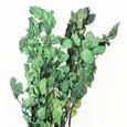Hètre stabilisé en botte coloris Vert