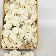 Mousse lichen d'islande Naturelle Grand Format