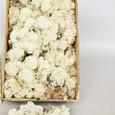 Mousse lichen d'Islande Naturelle