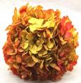 Hortensia stabilisé coloris Jaune Orangé