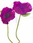 Fleur De PAVOT artificielle Mauve