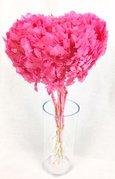 Hortensia stabilisé coloris Rose