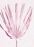FEUILLE DE PALMIER SUR TIGE Naturel Rose x 1
