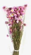 Acroclinium Naturel Séché Rose