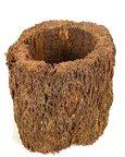 Pot de fougère arborescente diam 7 cm.