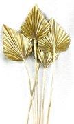Feuille de palmier or sur tige naturelle par 1