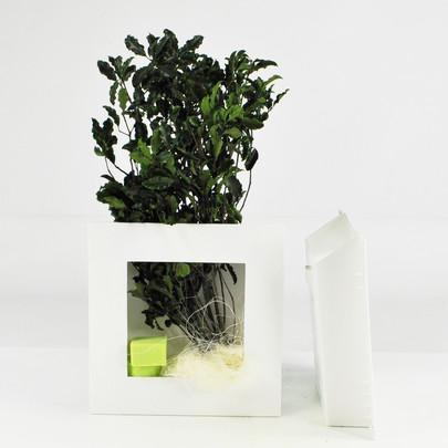 Cadre végétal à garnir coloris BLANC MM