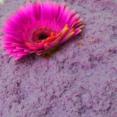 Flocon de poudre OASIS coloris VIOLETTE DE TOULOUSE