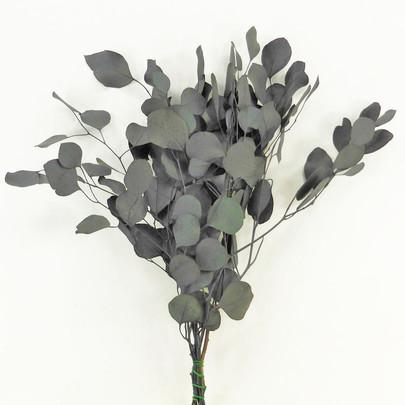 Eucalyptus populus stabilisé vert.