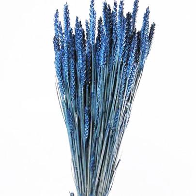 Blé naturel séché coloré Bleu en botte