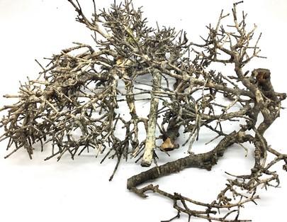 Bois de bonsaÏ NATUREL séché