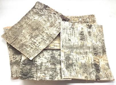 Plaque d'écorce de Bouleau séché 20cm x 15cm par 5 pièces