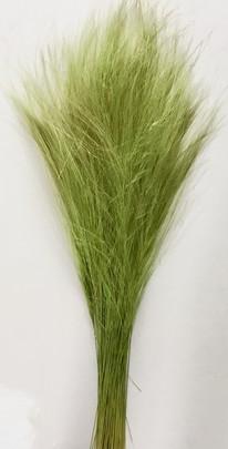 Barba Stabilisé Vert Jaune