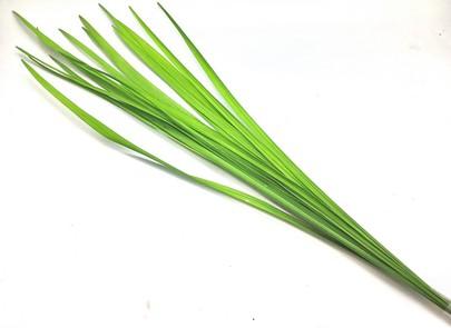 Miscanthus Stabilisé-Vert