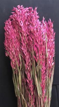 Avoine naturelle séchée botte rose
