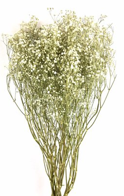 Gypsophile Naturel Stabilisé.