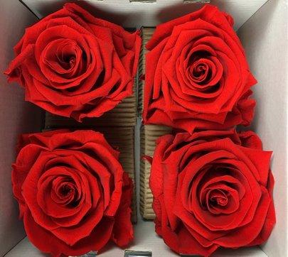 Rose stabilisée couleur Rouge par 4 pièces