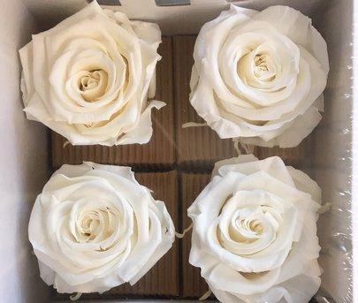 Rose stabilisée couleur Blanche par 4 pièces