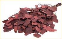 Eucalyptus populus stabilisé rouge