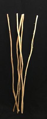 Amaranthus Tige Naturelle par 5 Branches