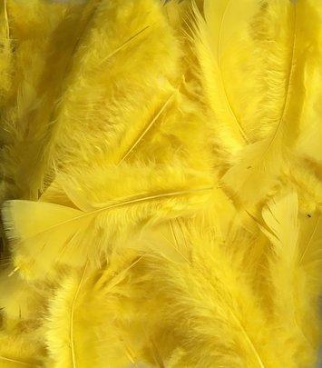 Plume colorée jaune