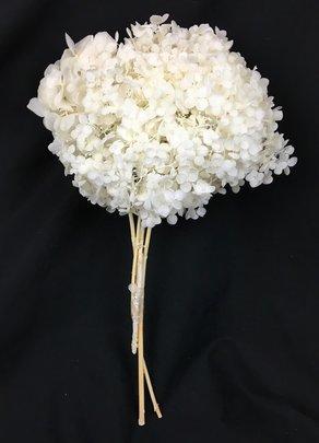 Hortensia stabilisé coloris Blanc