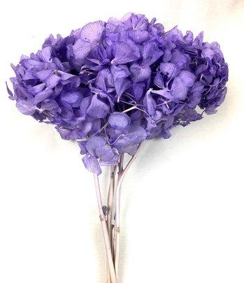 Hortensia stabilisé coloris Violet