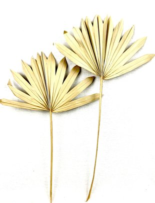 2 feuilles de palmier