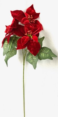 Bouquet de Poinsettia