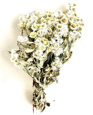 Edelweiss Anaphalis séchées