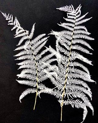 Lot de 2 feuilles de fougères stabilisées blanchies