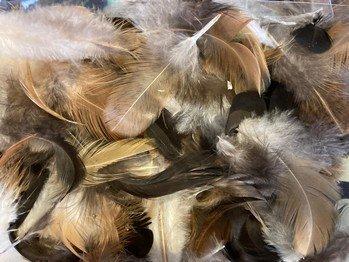 Petites Plumes de Poulet Naturelles