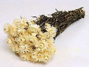 Hélichrysum séché Blanc en botte.