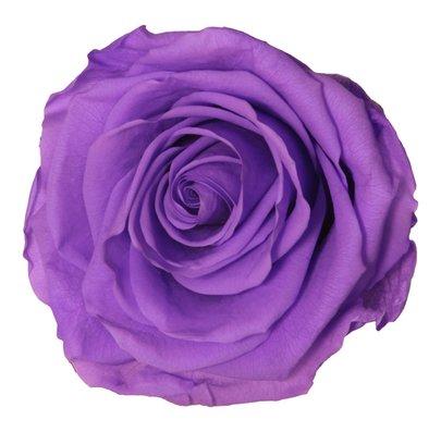 Rose stabilisée Verdissimo couleur Lilas par 1 pièce.