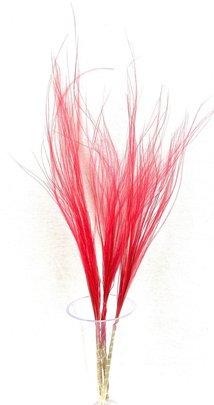 Stypa penata naturel rouge