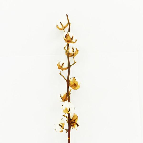 fleur s ch e branche de coton 6 fleurs environ. Black Bedroom Furniture Sets. Home Design Ideas