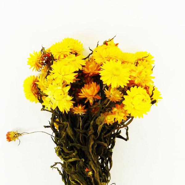 Fleur Sechee Helichrysum Seche Jaune Botte Materiel D Art Floral