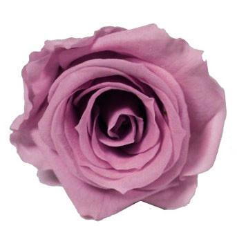 Rose Stabilisee Verdissimo Couleur Lilas Par 6 Pieces Materiel D