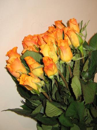 Roses trixx